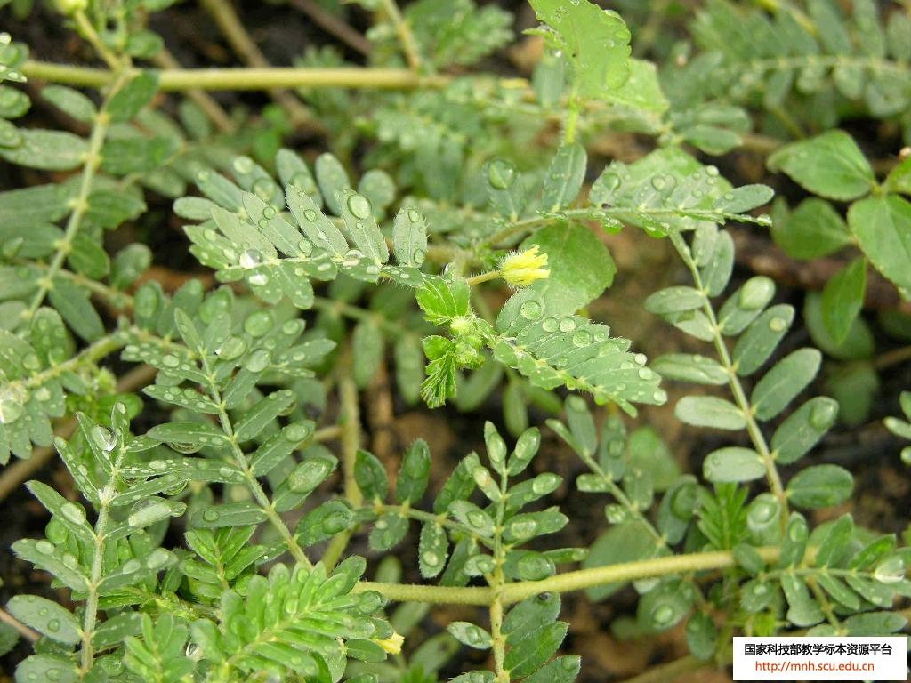 Herb Plants Pictures and Names